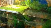 мостик для водных черепах